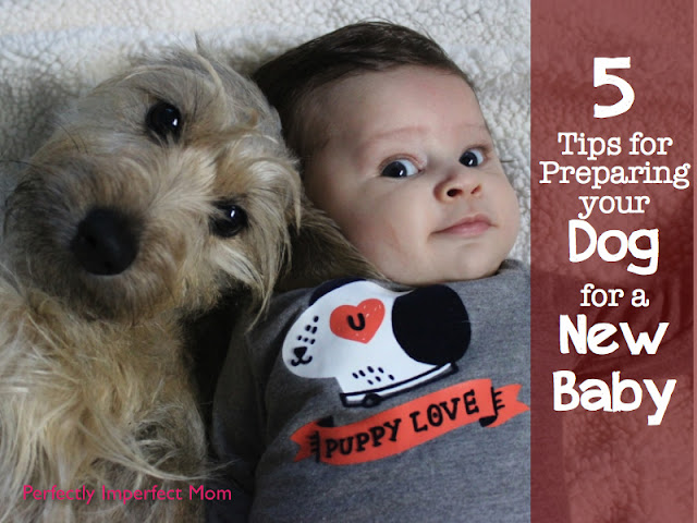 tips for preparing dogs for a new baby