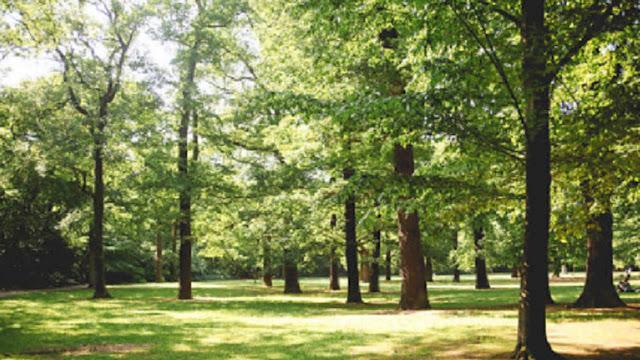 5 Pohon Paling Mematikan di Dunia, Salah Satunya Ada di Indonesia