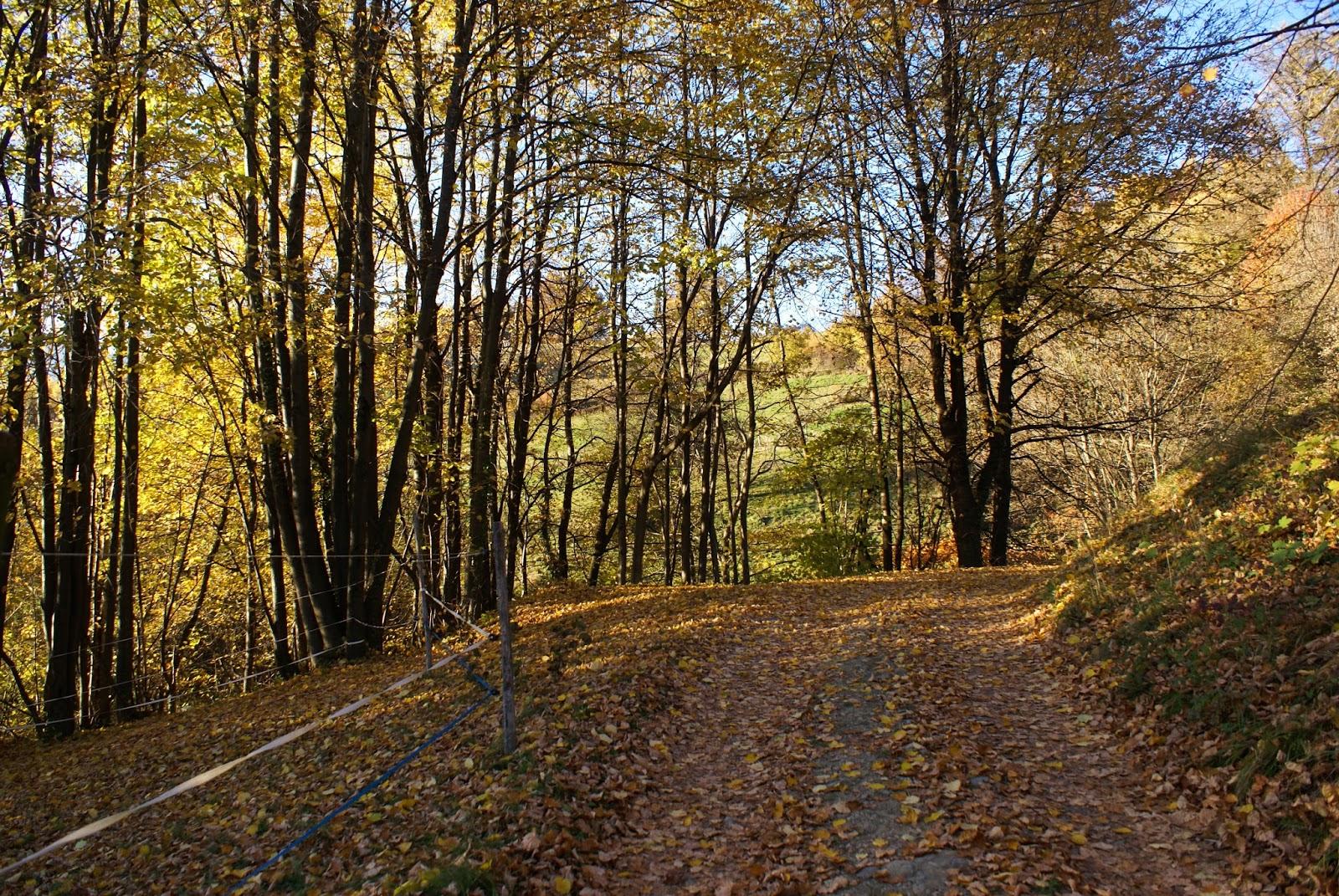automne savoie feuilles nature