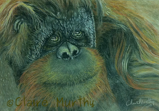Wildlife Art Pastel Painting