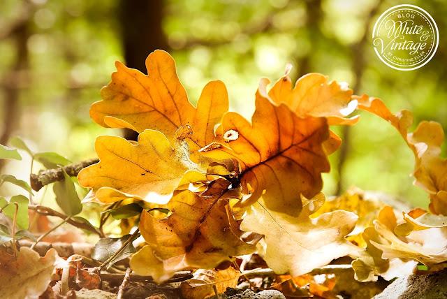 Upcycling Windlichter für den Herbst basteln