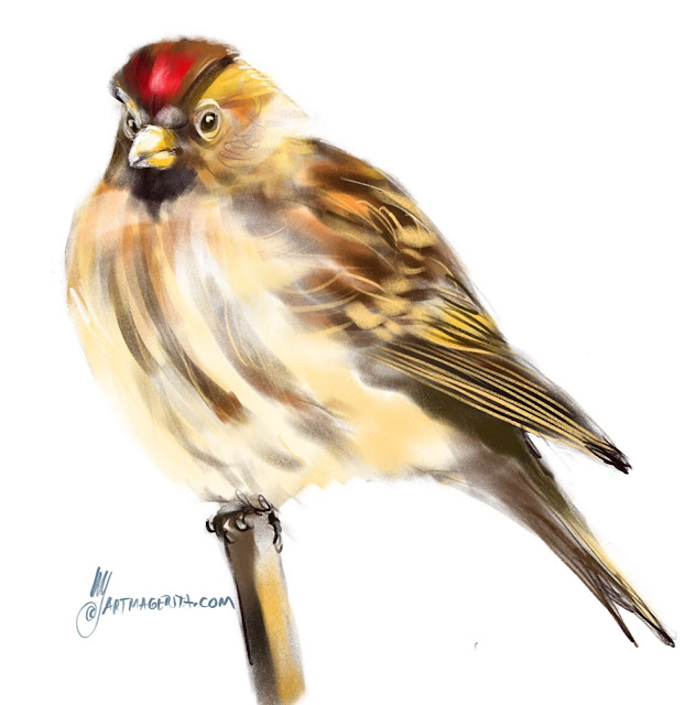 Common redpoll bird painting by Artmagenta