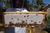 Υπάρχουν σκευάσματα τροφοδοσίας που δεν ανιχνεύονται στο μέλι;