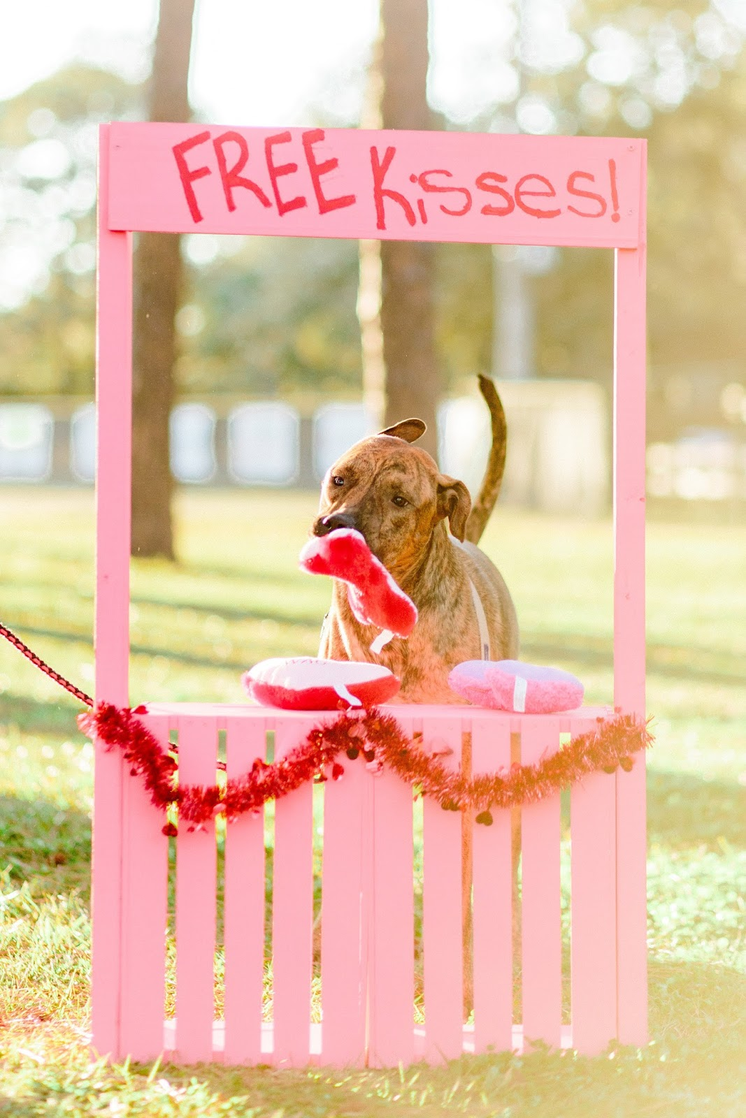 Brindle dog with Valentine's day dog toy in kissing booth