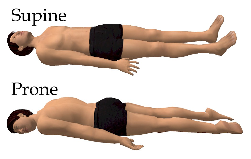 2 Anatomical Positions, Planes  Directions Anatomy Language - anatomical position