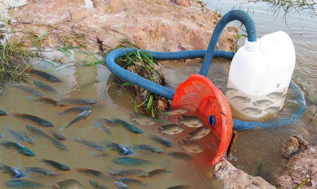 Μοναδική τεχνική ψαρέματος: Παγιδεύει τα ψάρια χρησιμοποιώντας έναν μακρύ σωλήνα και ένα μεγάλο πλαστικό μπουκάλι (video)