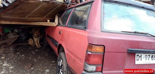 Automóvil queda bajo vivienda