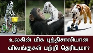 There are many animals in world but few animals were very talent