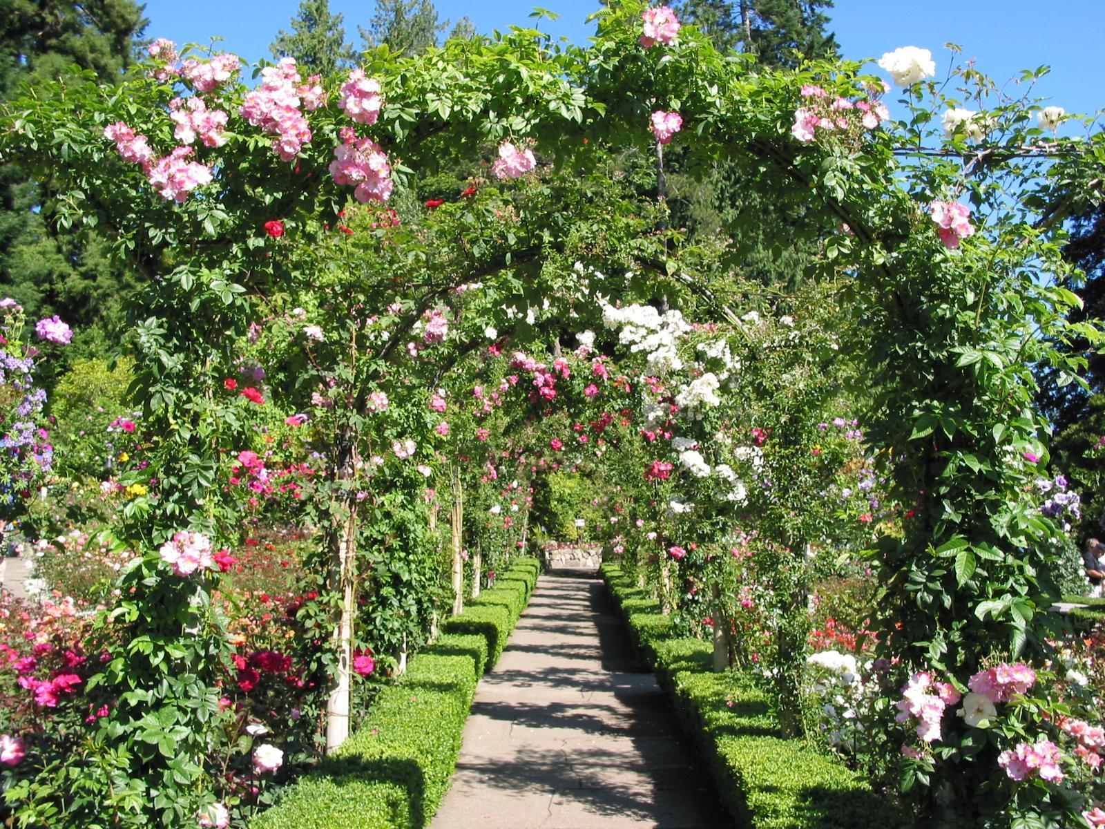 Photoshop Y Algo Mas Fondos Rosas: Jardin Rosas