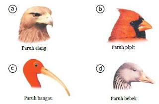 Bentuk Paruh dan Bentuk Kaki Burung atau Unggas Beserta Fungsinya