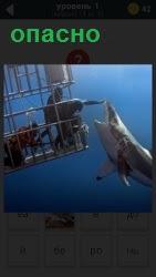 человек в клетке под водой и рядом плавает акула, пытаясь нападать