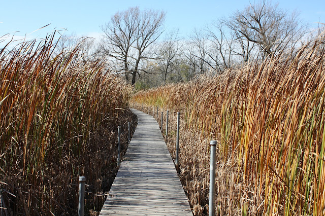 Boardwalk through the Volo Bog the only quaking bog in Illinois.