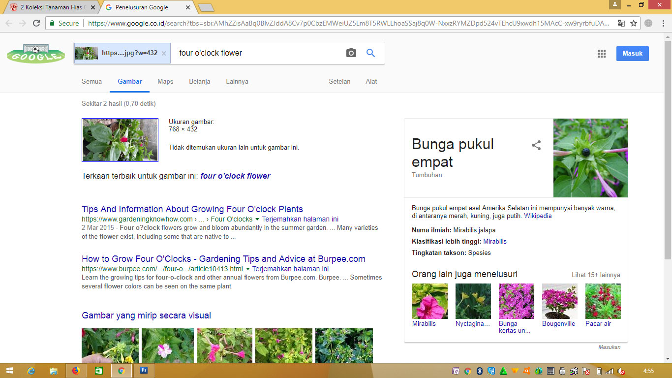 Hasil Pencarian Search Google for Image