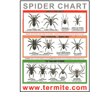 Image: free Spider Identification Chart