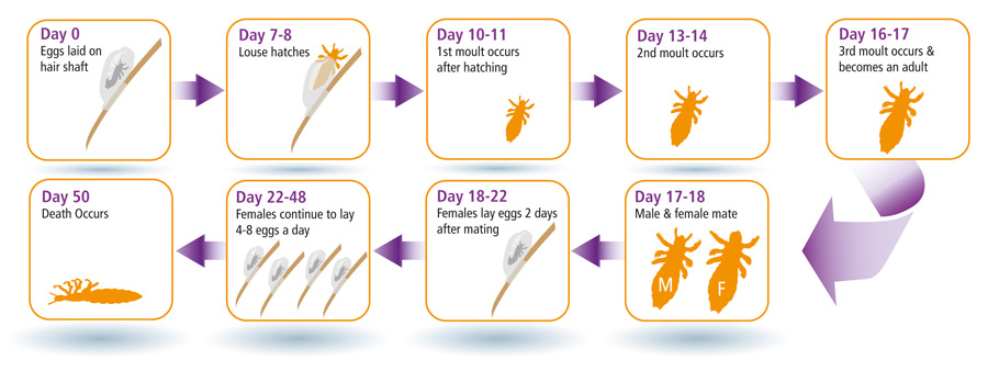 The No-Chemical Head Lice Game Changer EVERY Parent ... - photo#17