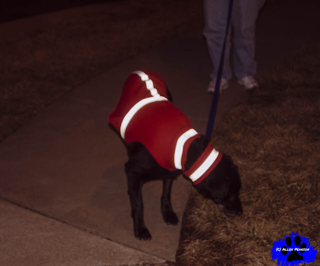 Dog Reflective Wear