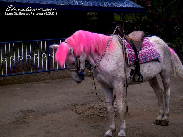 Baguio City | Lady Horsie Gaga