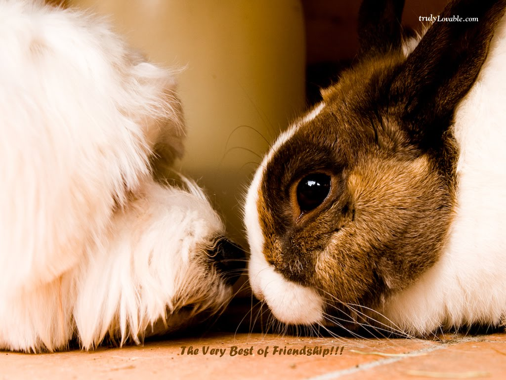 Download friendship wallpaper for Best dogs for companionship