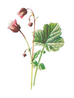 wildflower image digital flower download illustration antique