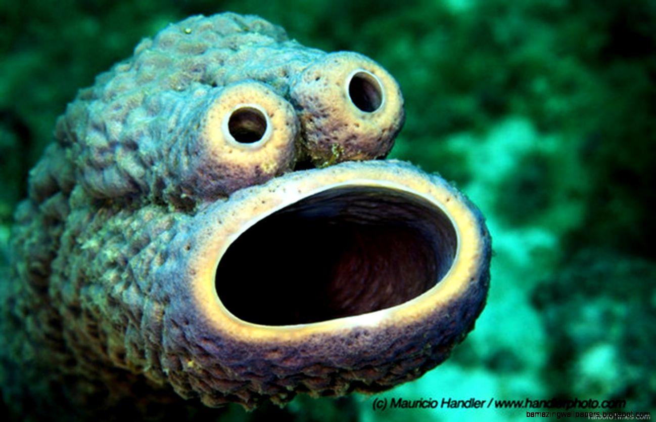 Very Rare Sea Animals Rare Sea Monsters Amazing