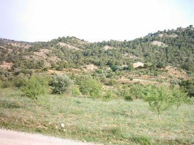 La pileta, camino, pantano de Pena, embalse, finca, almendros, olivos 4