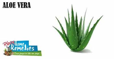 Home Remedies To Abbreviate Pimple Redness: Aloe Vera