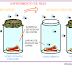 A História da Origem da Vida #1 - Abiogênese vs. Biogênese