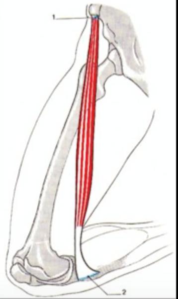 initiale osteochondrose