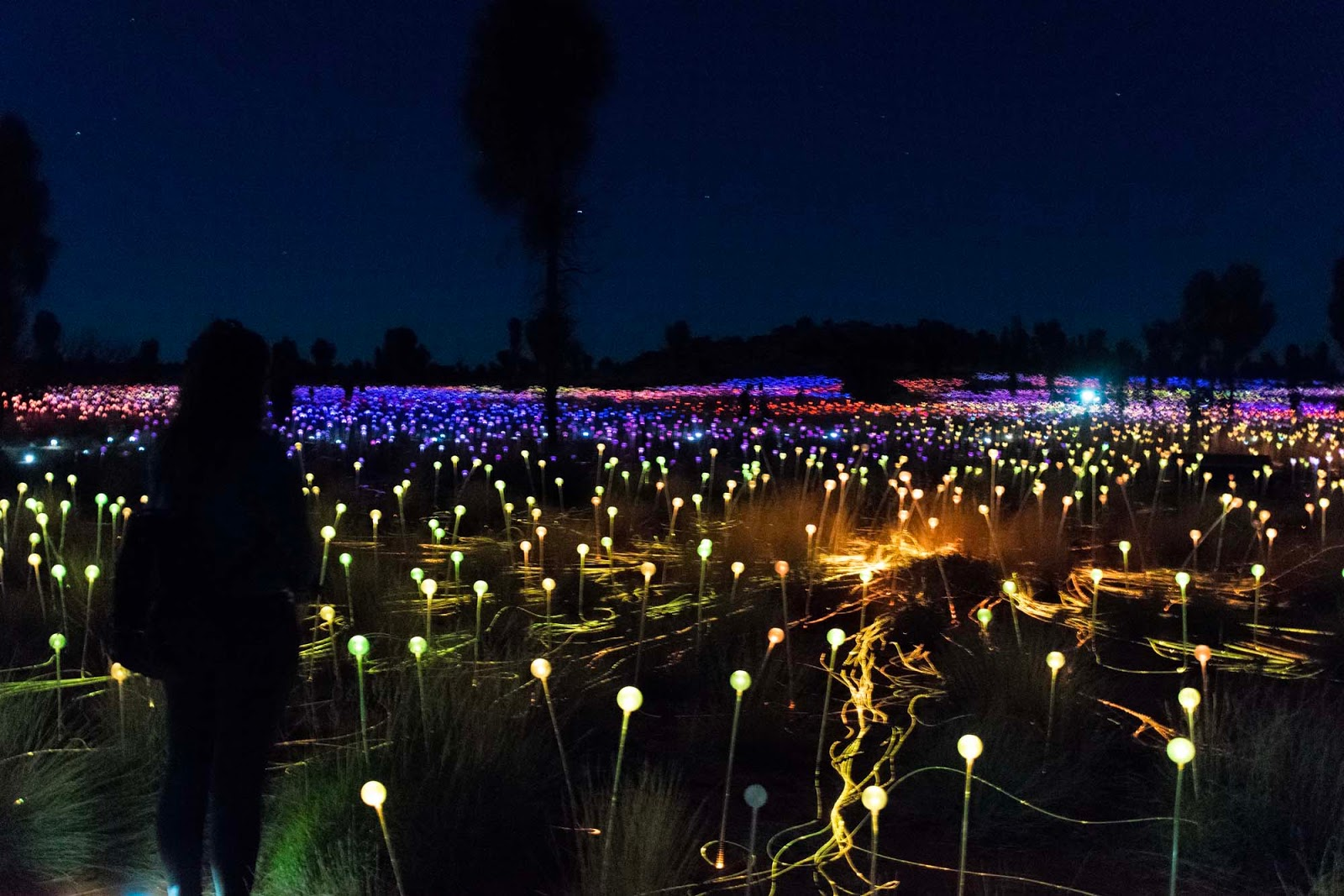 field of light at uluru