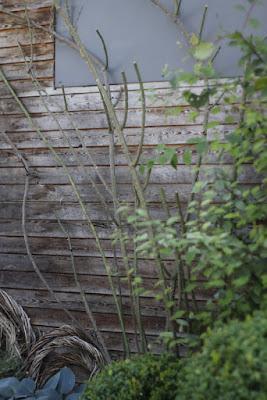 Besucher Kommen Zur Blütezeit Im Vorgarten Nicht Ohne Staunen An Der Kletterrose Constance Spry Vorbei Doch Genauso Ont Wie Blüte