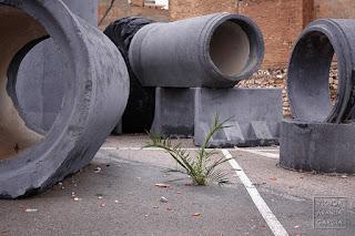Fotografía de una pequeña palmera creciendo en el asfalto entre grandes tubos