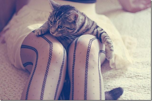 Вакансия мечты: обниматель котов