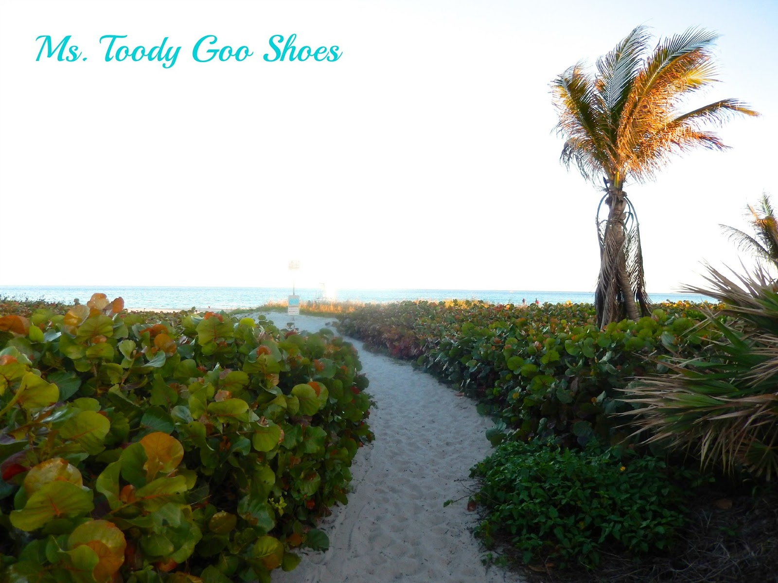 Florida --- by Ms. Toody Goo Shoes