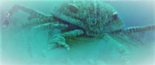 Jaekelopterus Jenis Hewan Besar yang Menakutkan Hidup di Zaman Pra-sejarah