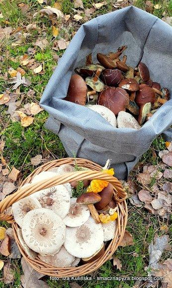 grzybobranie, grzyby, zdziski, dzisiaj zbierane, pozysk, grzyby w pazdzierniku