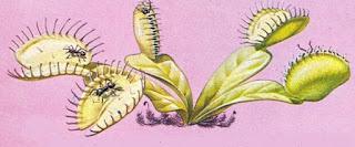 Böcek Yiyen Bitkiler Fotosentez Yapar Mı?
