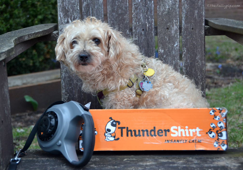 Ruby tries ThunderShirt's Dial-A-Distance Dog Leash