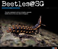 Beetles@SG Website