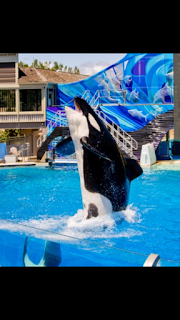 SeaWorld Abu Dhabi to be Indoor Climate Controlled.