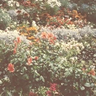 20 Imagenes de Flores para la Primavera