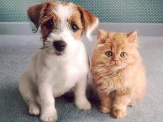 Onde Castrar Gato e Cachorro SP Gratuitamente Endereços