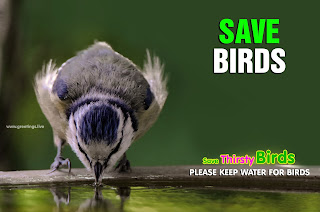 Keep water for Thirsty Birds Save Birds