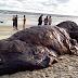 Pics: Carcass of HUGE dead whale found on Akwa Ibom beach