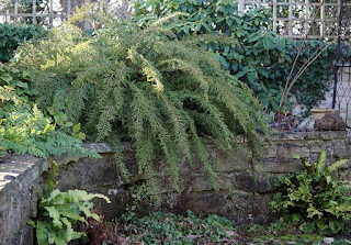 plants, ferns, foliage,
