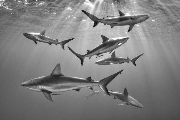 The Best Underwater Photos EVER Taken Show Life From A Different Angle. - 'Seven' by Mathieu Foulquié (France)