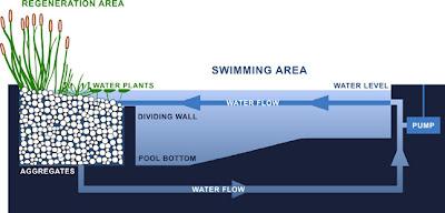 el agua circula de la zona de natacin a la de regeneracin en el rea de regeneracin el agua se decanta y es filtrada a travs de grava y arena