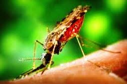 Klasifikasi Malaria Berdasarkan Jenis Plasmodium