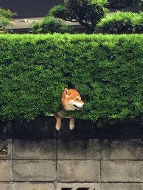 Everything is okay! Funny dog