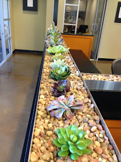 Office Succulents