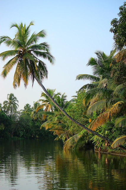 Backwater, view, Houseboat, coconut, trees, Alleppey, Kerala